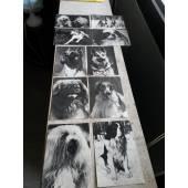 почтовые черно- белые открытки