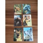 карманный календарик с изображением собак