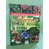 Лесные грибы, ягоды и травы. Иллюстрированная энциклопедия